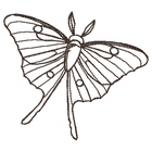 Luna Moth Sketch (Set)