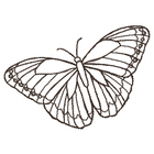 Butterfly Sketch (Set)
