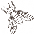 Honeybee Sketch (Set)